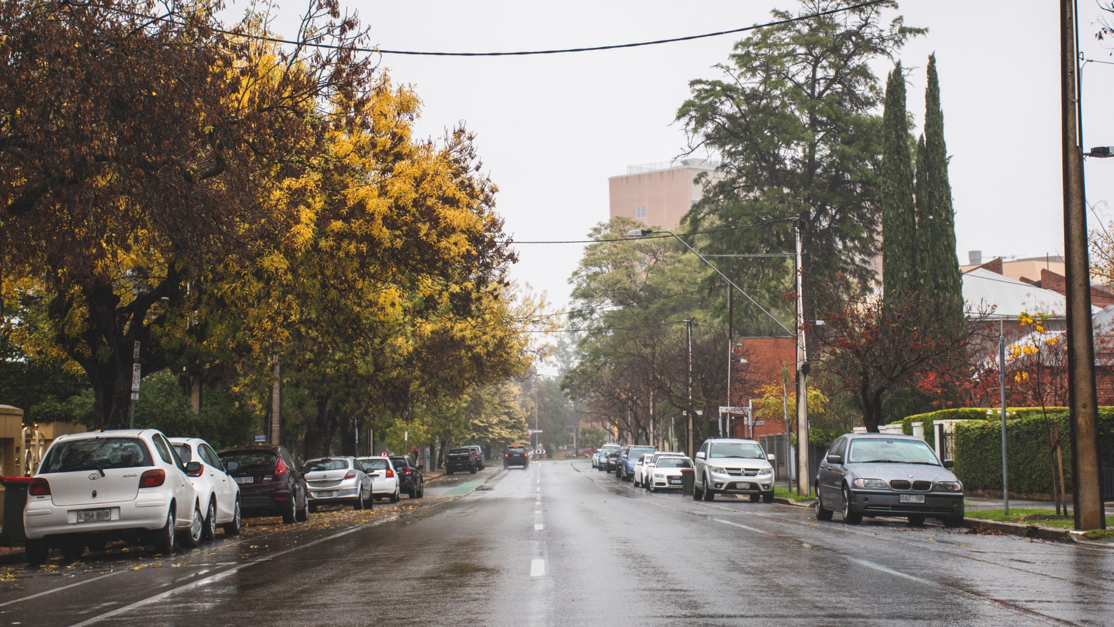 Photo of an Adelaide city street lined with parked cars and trees. There is a tall building in the background and it is raining